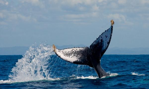 stage auprès des baleines, méditation, détente, relaxation, ancrage, eau, sons, silence, musique